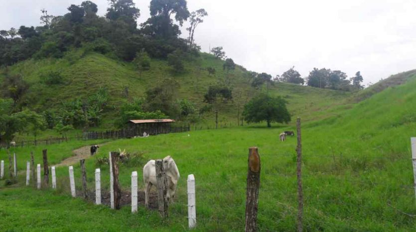 pasture land for development for sale