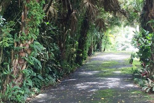 Palm Tree LinedDrivway